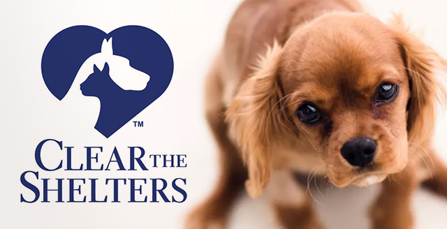 Clear the Shelters | KGET 17