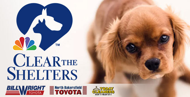 Clear The Shelters - August 1-29