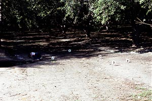Kern County orchard crime scene